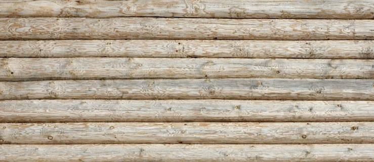 Čemu věnovat zvýšenou pozornost při výběru stromů pro stavbu domu?